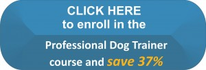Become a Professional Dog Trainer