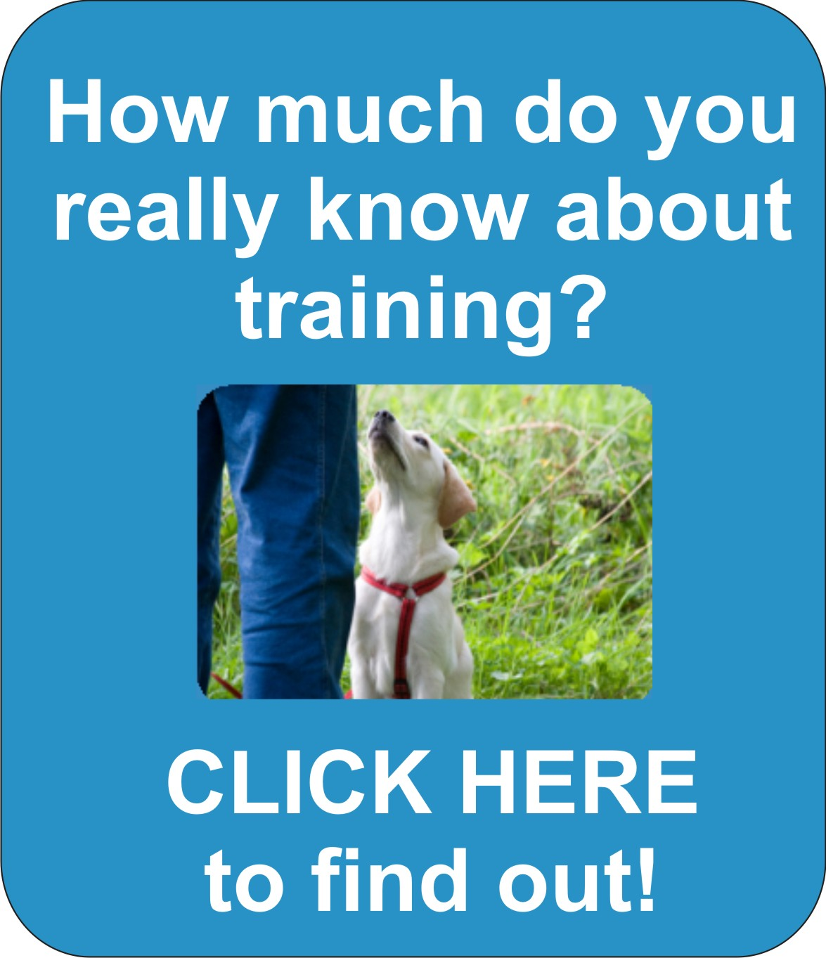 professional dog trainer school